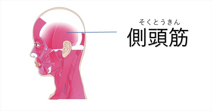 側頭筋の図示