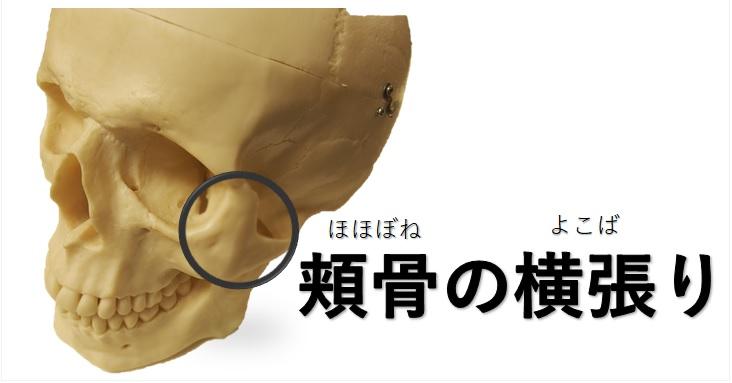 頬骨の横張りの図示と文字