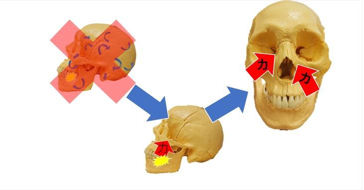 頭蓋の動きと圧の緩衝について