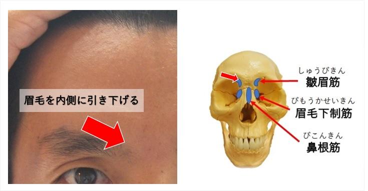 皺眉筋の作用