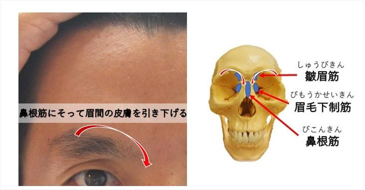 眉毛下制筋の作用