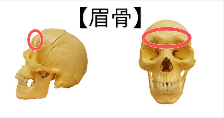 眉骨の図示