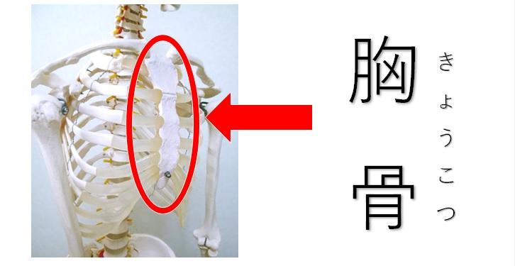 胸骨の位置を図示
