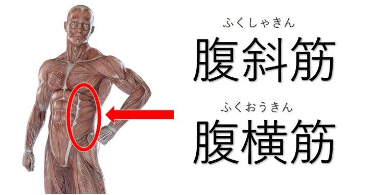 腹斜筋と腹横筋の図示