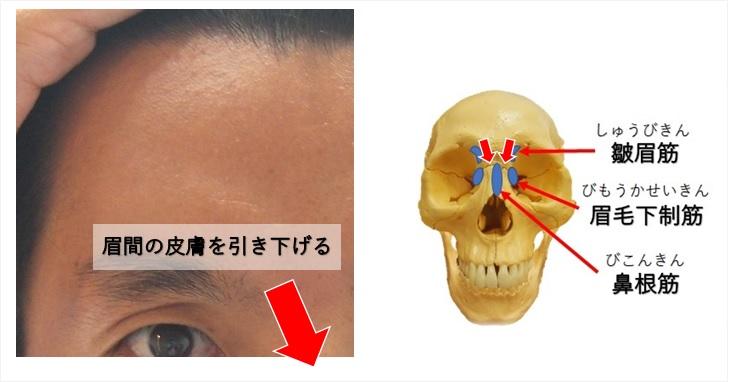 鼻根筋の作用