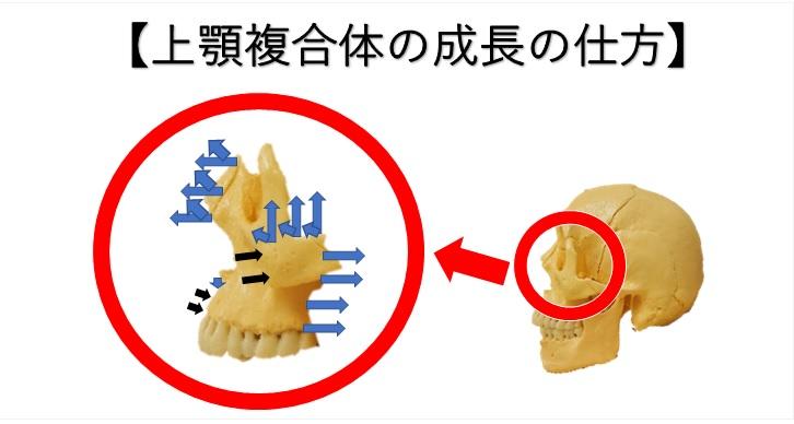 上顎複合体の成長の仕方