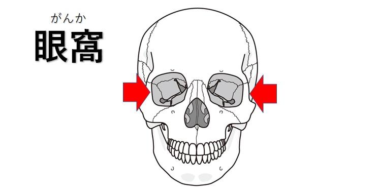 眼窩のイラスト