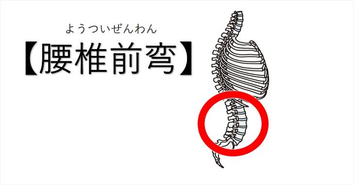 腰椎前弯の図示
