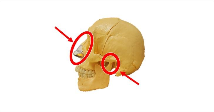 鼻と顎の図示