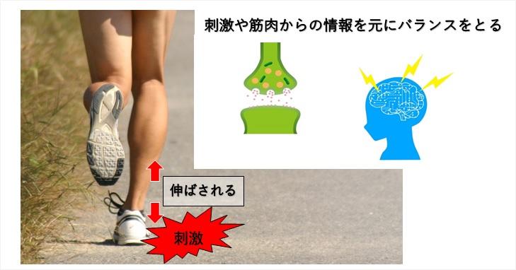 腱反射のイメージ