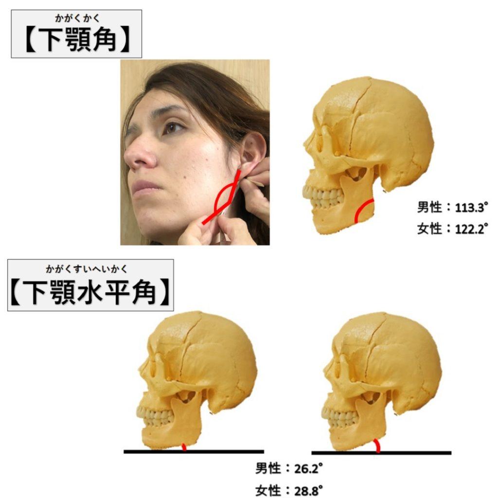下顎角と下顎水平角
