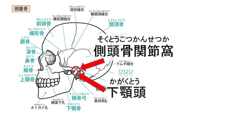 顎関節の説明