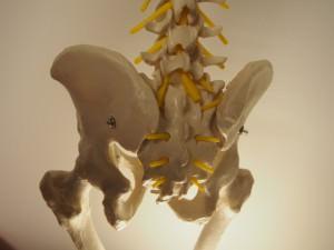 骨盤矯正 期間