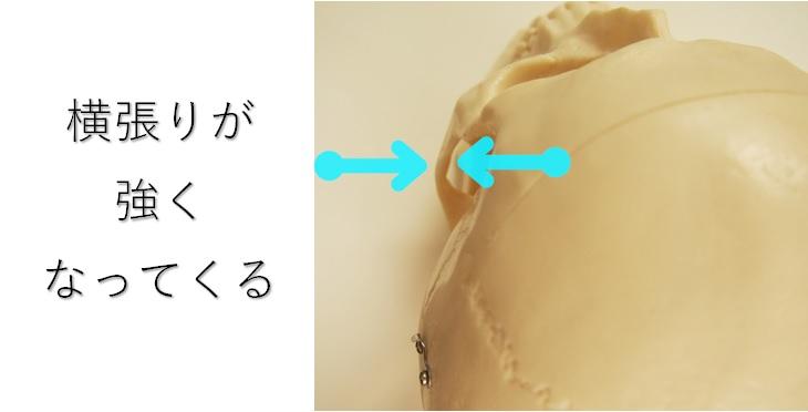 頬骨の横張りは成長に従い強くなる