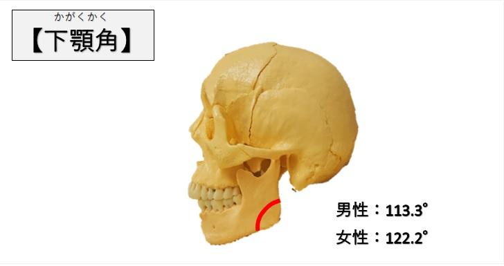 下顎角の図示と参考角度