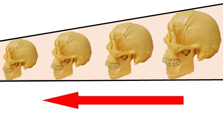 年々小さくなる頭蓋骨