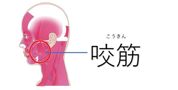 横顔の咬筋