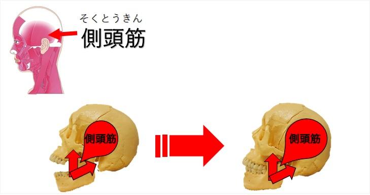 側頭筋の筋活動