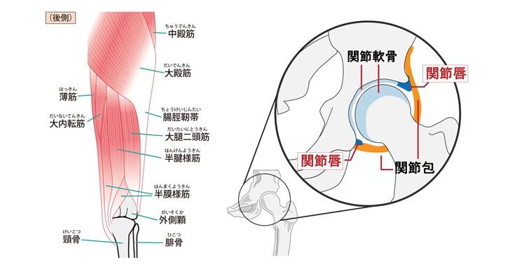 大殿筋と股関節