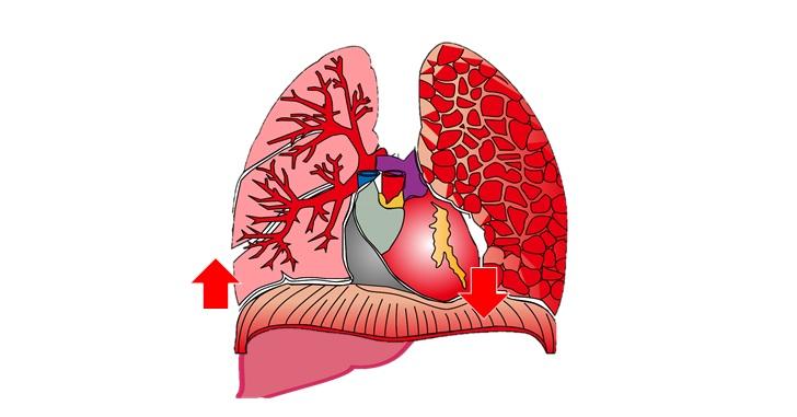 肝臓と心臓と横隔膜の位置
