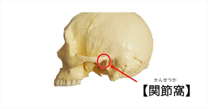側頭骨関節窩の図示