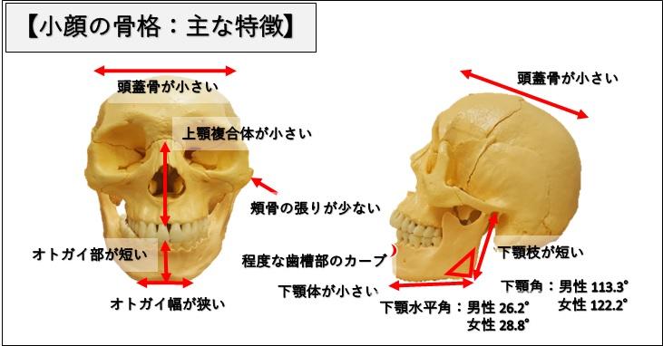 小顔の骨格の主な特徴