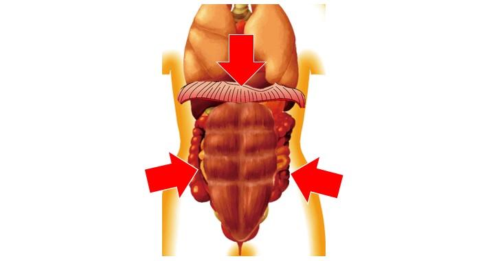 横隔膜と腹筋と内臓蠕動