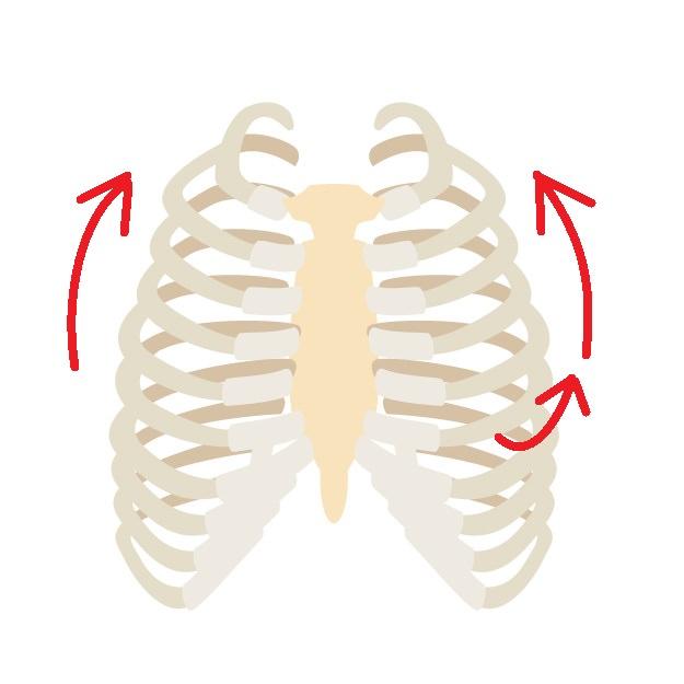 肋骨動き2