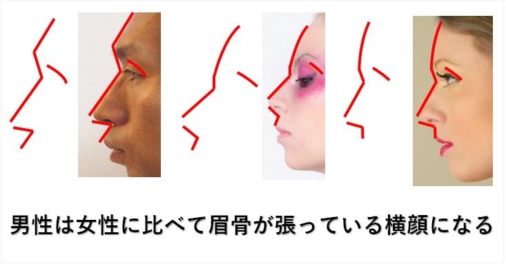 男性と女性の横顔の違い