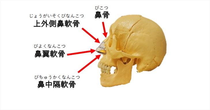 鼻骨の構造の図示