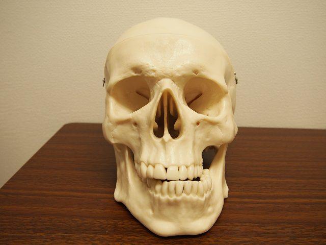 顎のずれのモデル