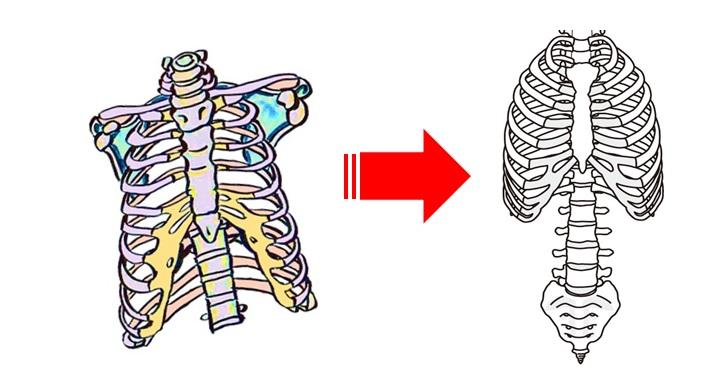 胸郭を整えるイメージ