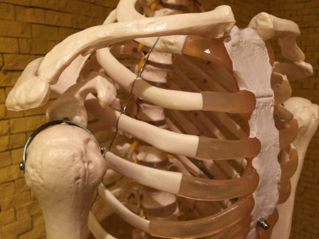 整体は肋骨を治し呼吸を楽にする