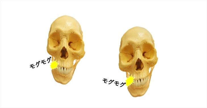 モグモグ食事する頭蓋骨