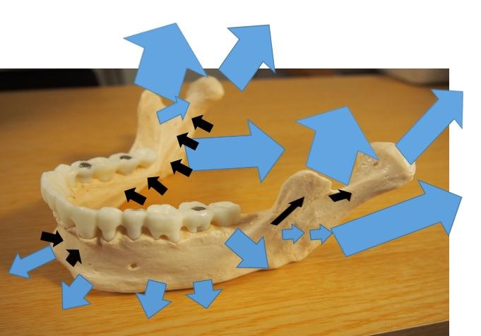 下顎骨の成長方向