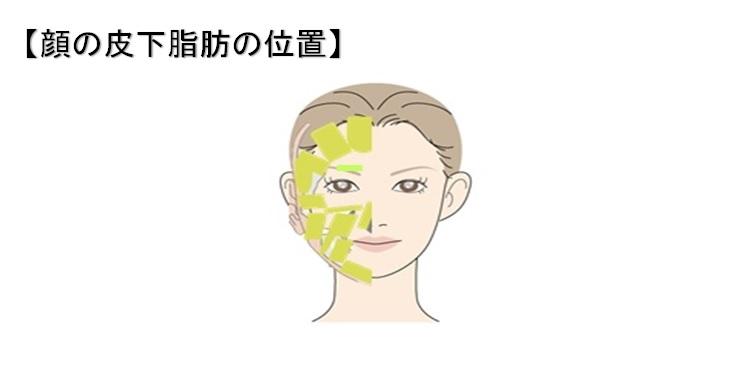 顔の皮下脂肪の位置