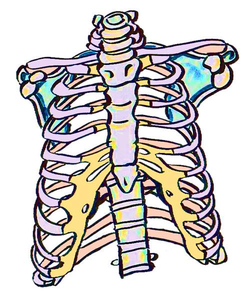 肋骨の歪みのイメージ