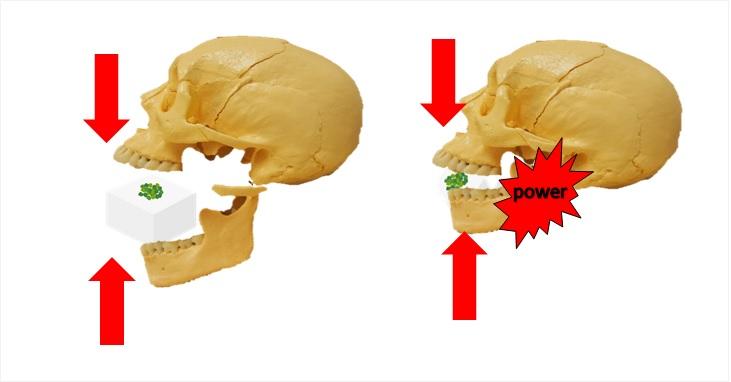 豆腐を必要以上の力で噛む頭蓋骨