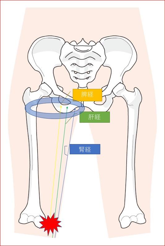 股関節の経絡