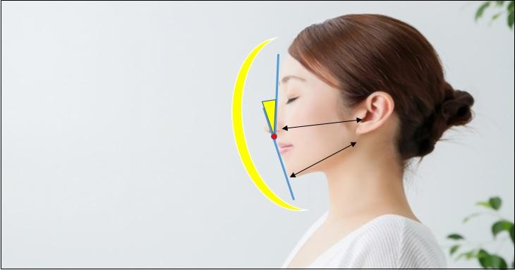 顔の横顔の輪郭