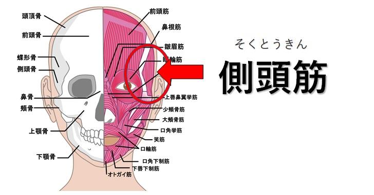 側頭筋の場所