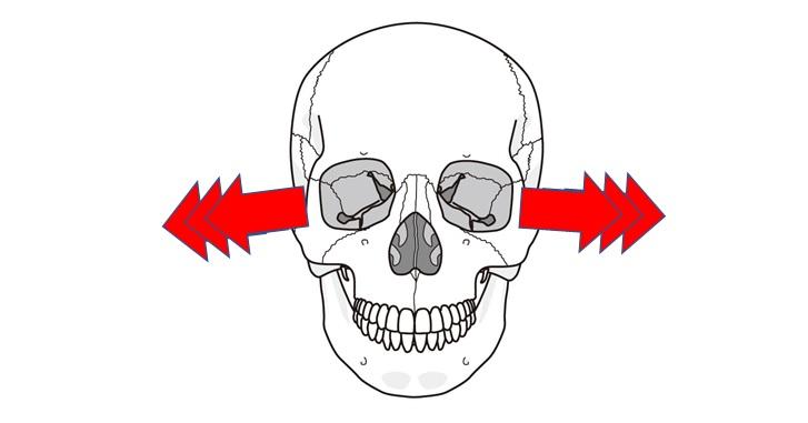 外側からの側頭骨と蝶形骨の動き