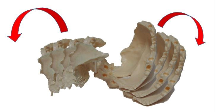 蝶形骨と後頭骨リズム