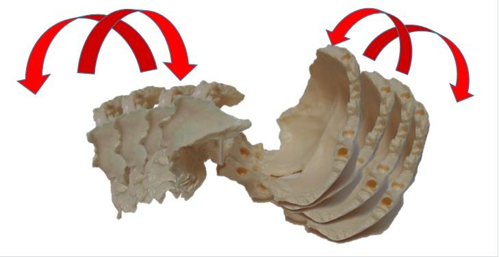 蝶形骨・後頭骨リズム