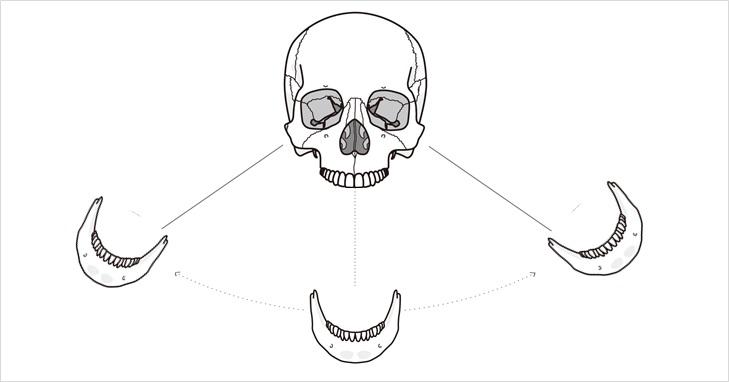 下顎平衝機能のイメージ