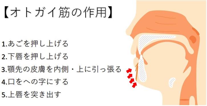 オトガイ筋の作用