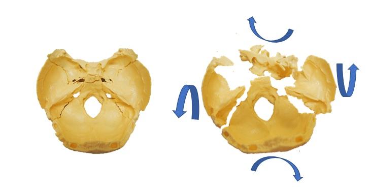 sbjと側頭骨の動き