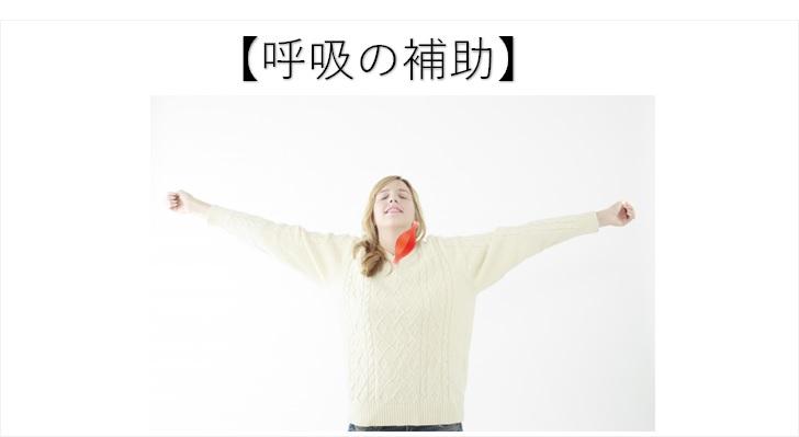 胸鎖乳突筋の働き【呼吸】