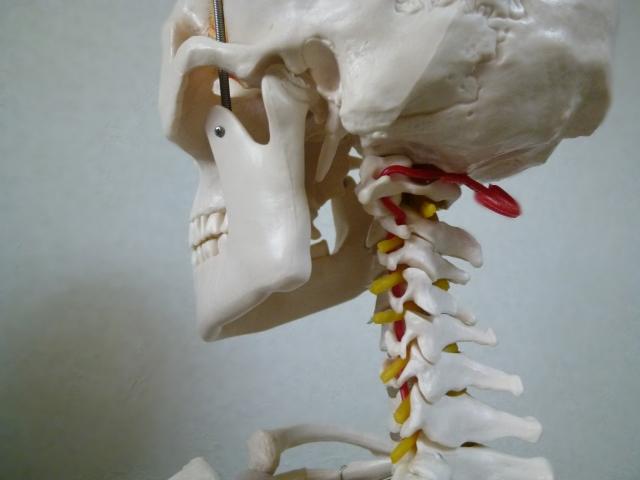 首には神経が豊富