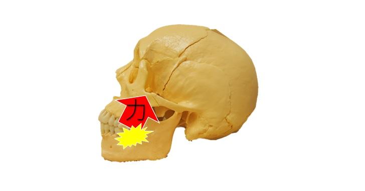 噛む事による頭蓋骨への影響